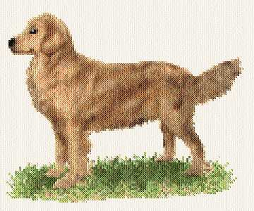 cross stitch pattern Golden Retreiver