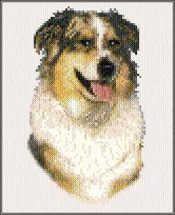 cross stitch pattern Tazz - Australian Shepherd