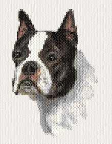 cross stitch pattern Boston Terrier