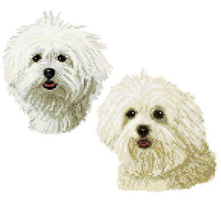cross stitch pattern Maltese twins
