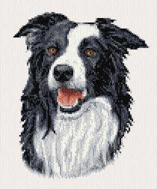 cross stitch pattern Border Collie