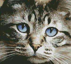 cross stitch pattern Blue Eyes