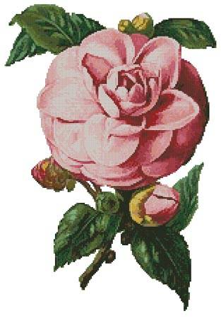 cross stitch pattern Camellia 6