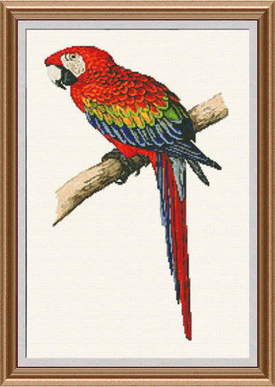 cross stitch pattern Scarlet Macaw