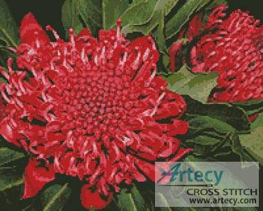 cross stitch pattern Waratah