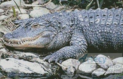 cross stitch pattern Alligator 1
