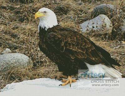 cross stitch pattern Bald Eagle Photo