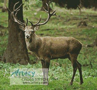 cross stitch pattern Buck Photo