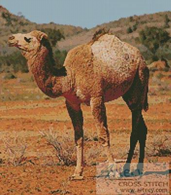 cross stitch pattern Camel