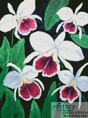 cross stitch pattern Cattleya Orchids