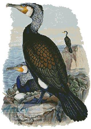 cross stitch pattern Cormorant