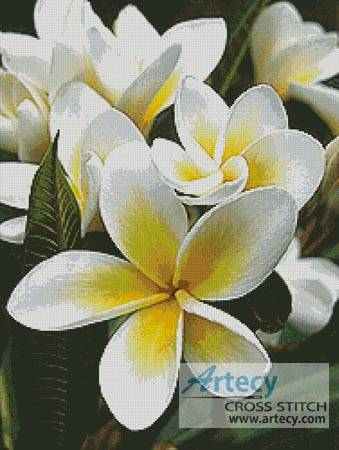 cross stitch pattern Frangipani 1