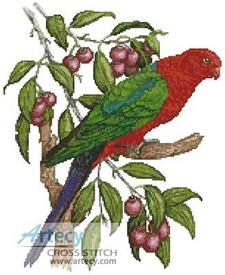 cross stitch pattern King Parrot