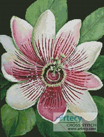 cross stitch pattern Passion Flower