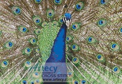 cross stitch pattern Peacock Display