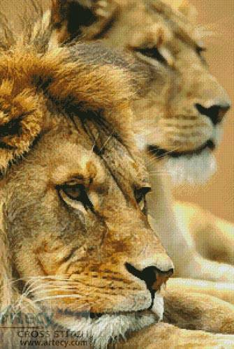cross stitch pattern Lion Couple