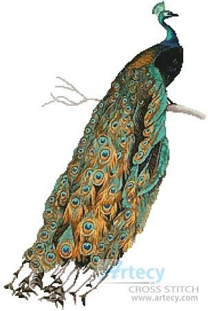 cross stitch pattern Peacock 2