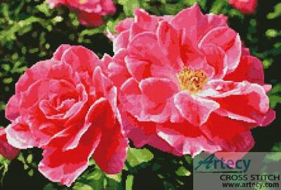 cross stitch pattern Rose Photo