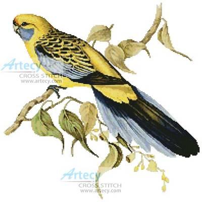 cross stitch pattern Yellow Rumped Parakeet