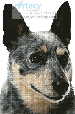 cross stitch pattern Blue Heeler Portrait