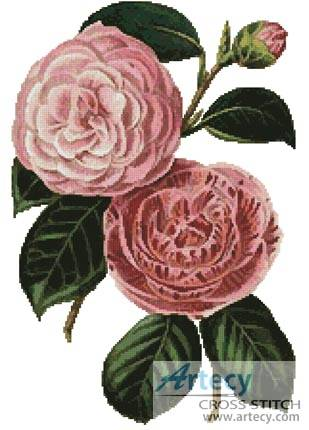 cross stitch pattern Camellias 5