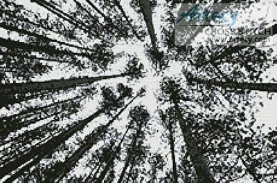 cross stitch pattern Looking up at Pine Trees