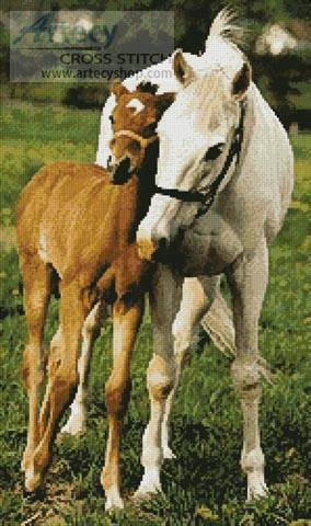 cross stitch pattern Mare and Foal Photo