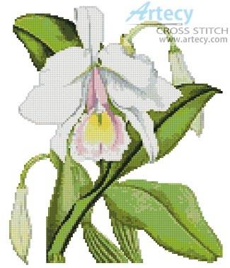cross stitch pattern Pallid Cattleya Orchid
