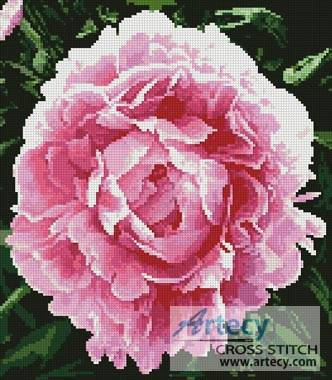 cross stitch pattern Peonie