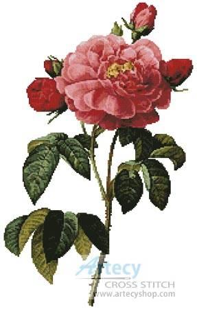 cross stitch pattern Rosa la Duchesse D'Orleans