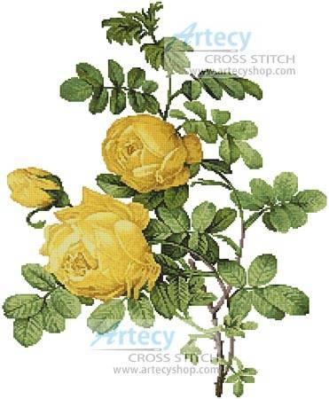 cross stitch pattern Rosa Sulfurea