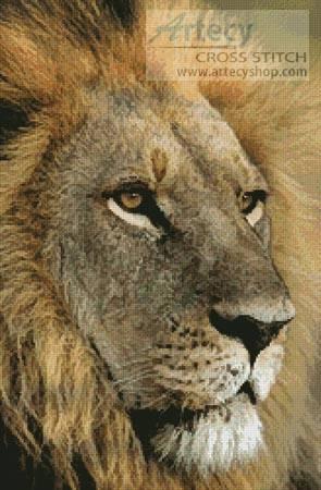 cross stitch pattern Lions Gaze