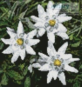 cross stitch pattern Mini Edelweiss