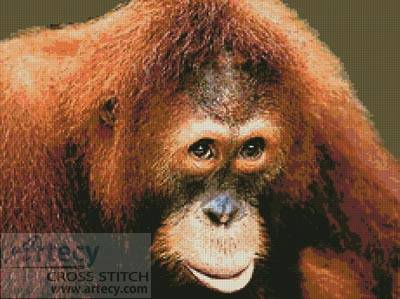 cross stitch pattern Orangutan
