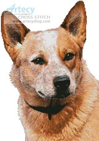 cross stitch pattern Red Heeler