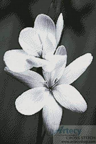 cross stitch pattern Black and White Frangipani