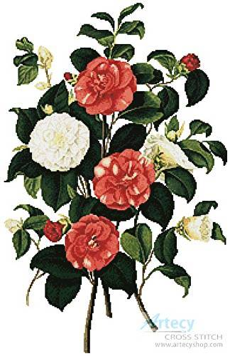 cross stitch pattern Camellias 1