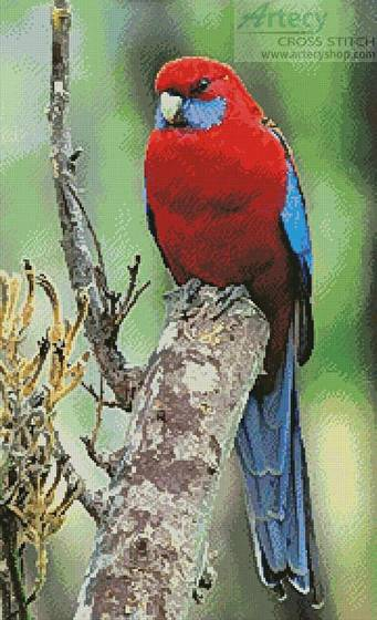 cross stitch pattern Crimson Rosella Photo