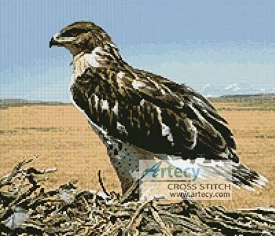 cross stitch pattern Hawk