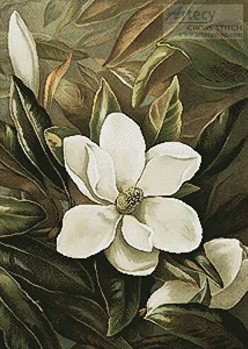 cross stitch pattern Magnolia Grandiflora