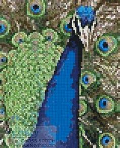 cross stitch pattern Mini Peacock 1