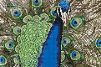 cross stitch pattern Mini Peacock 2