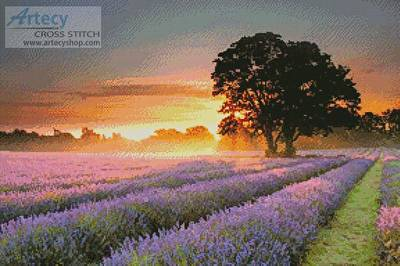 cross stitch pattern Mayfair Lavender at Sunrise