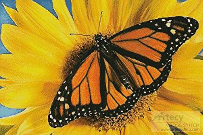 cross stitch pattern Monarch Sunflower