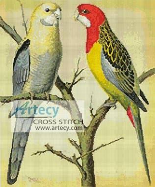 cross stitch pattern Rosella and Pale Headed Parakeet