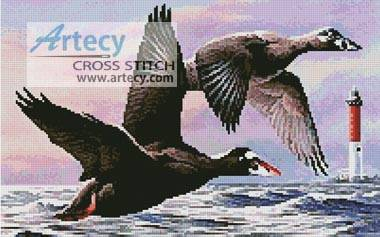 cross stitch pattern Surf Scoter Ducks