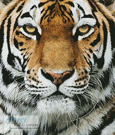 cross stitch pattern Tiger Portrait