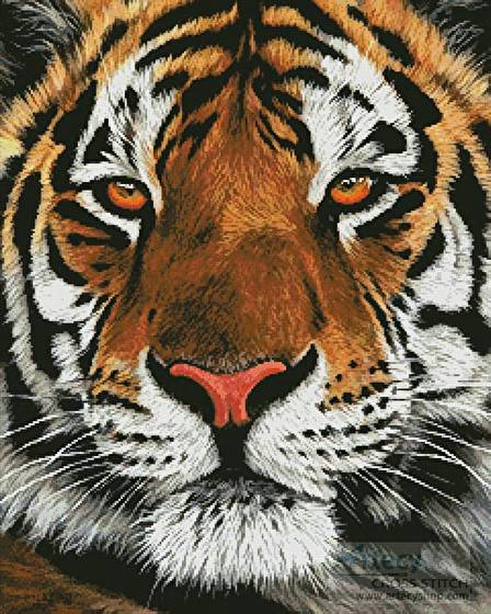 cross stitch pattern Bengal Tiger Portrait