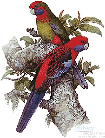 cross stitch pattern Crimson Rosellas