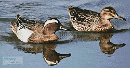 cross stitch pattern Garganey Ducks